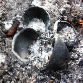 Pots nestled in ashes on rainy New Year morning