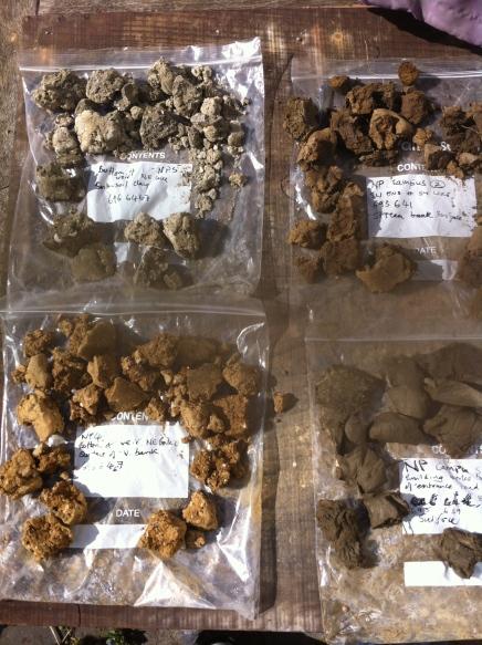 Newton Park clay samples