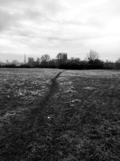 Path and Worcester cathedral from Chapter Meadows