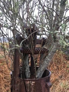 !850s Blunging machine with Rowan tree