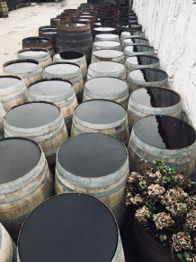 Whiskey barrels out in the yard, Kilchoman Distillery